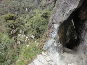 One of the Inca tunnels