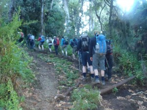 Walking up hill on Kilimanjaro