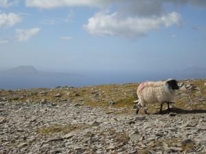 Top of Ireland Holy mountain Croagh Patrick
