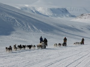 Watching others crossing Svalbard with dogs