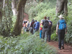 Hiking through the rain forest on Kilimanjaro.