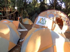Big Tree Camp on Kilimanjaro