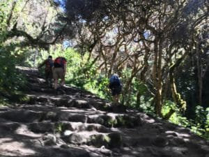 Walking through the Forest on the Inca Trail