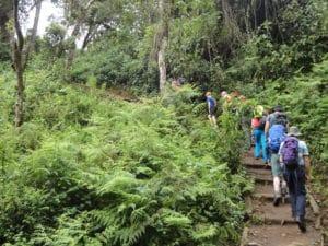 20 Reasons to Climb Kilimanjaro with Ian Taylor Trekking